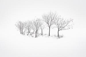 vicio-trees