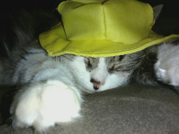 vexed cat